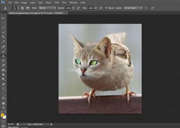 Kursus Desain Grafis untuk Anak, Photoshop, Penggabungan Foto